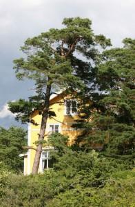 asunnon-ostaminen-talo