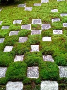 Sammal kertoo tietyntyyppisestä maaperästä (Kuva: kimubert CC BY-SA 2.0)