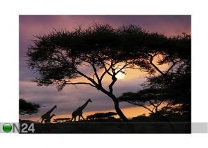 Afrikan Safari, On24.fi