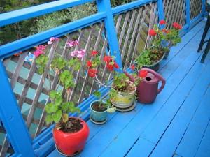 Kukat nauttivat ulkosalla olosta (Kuva: lil'bear CC BY 2.0)